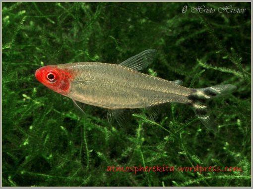 Soaboa - Jenis Jenis Ikan Hias Air Tawar Aquascape Paling Lengkap